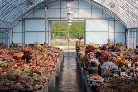 Pracownik centrum ogrodniczego w Holandii (M/K)