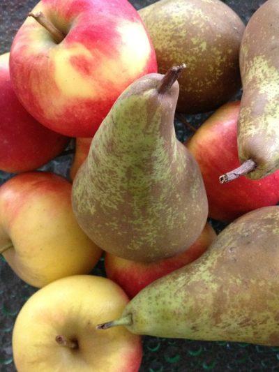 Praca przy sortowaniu owoców w Holandii