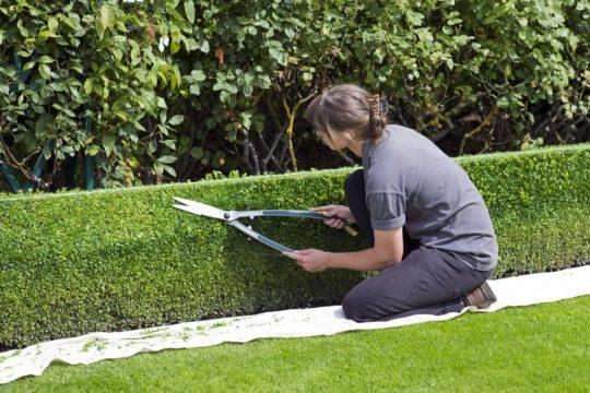 Pracownik do zakładania ogrodów w Holandii